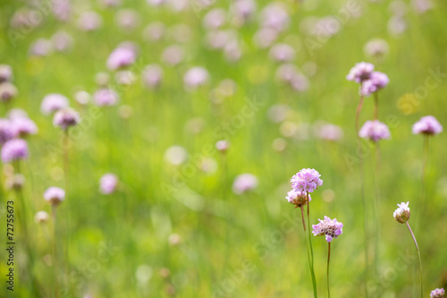 canvas print picture light pink and green wild flowers background