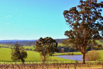 Colourful wine orchad in Adelaide Hills