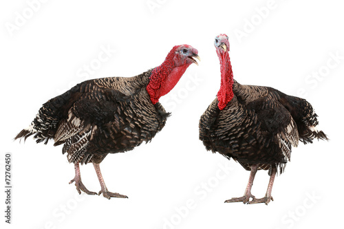 Turkey - 72762450