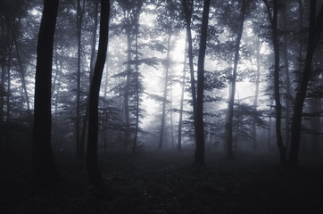 edge of the forest with glowing light and fog