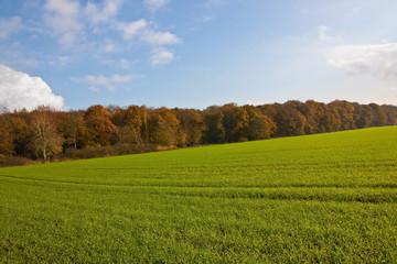 Agrarlandschaft im Herbst