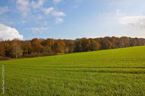 canvas print picture Agrarlandschaft im Herbst