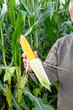 Farmer controls his corn field