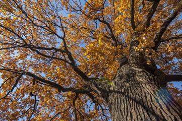 Fall in Botaical Garden