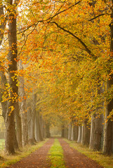 Autumn colors in a lane of trees.