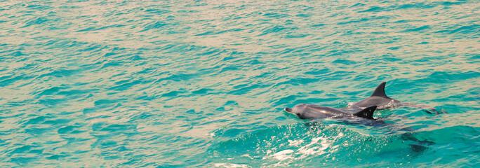 Australische Delphine