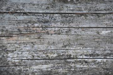 detalle de la corteza de un arbol