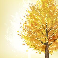 イチョウ 木 秋 紅葉 Golden tree in Autumn