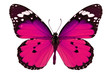 pink butterfly - 72775262