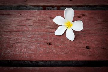 Plumeria flower on wood floors