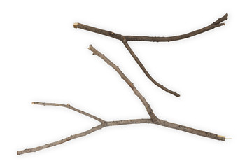Branches Sticks