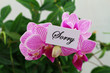 Sorry card with pink orchid