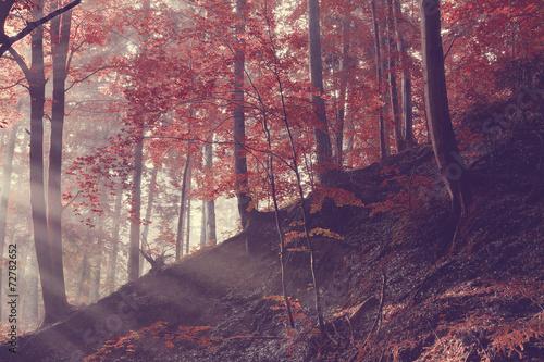 Fotobehang Crimson Sunrise on the forest slope
