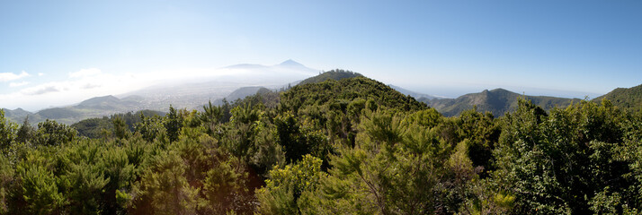Landscape of pines and mountains in Tenerife
