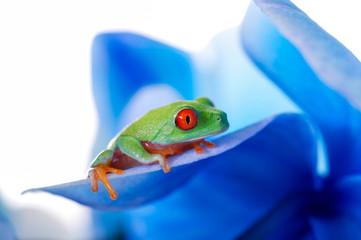 Bunter Frosch auf blauen Blättern