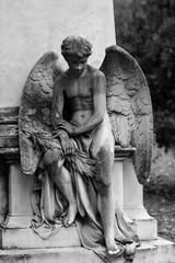Angel in Kerepesi