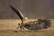 Sea eagle, air brakes