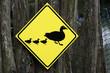Vorsicht Enten kreuzen