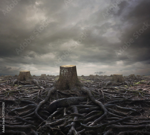 Foto op Canvas Bossen Tree stumps
