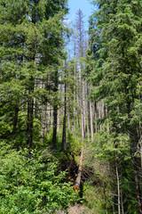 Ttatra woods