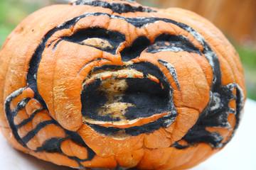 Carved Halloween pumpkin decomposing