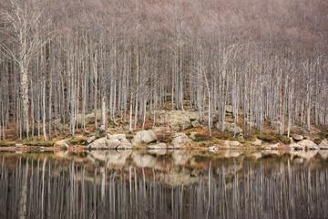 alberi riflessi nel lago