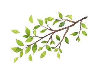 緑の葉がついた木の枝 水彩イラスト