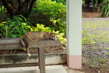 Cat lying on a wooden chair