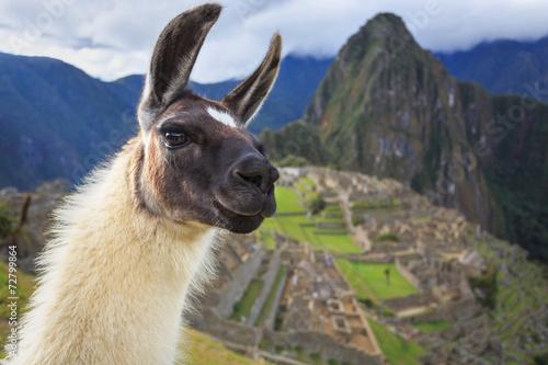 Keuken foto achterwand Lama Machu Picchu, Peru, UNESCO World Heritage Site. One of the New S