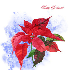 Watercolor background  with poinsettia flowers-05