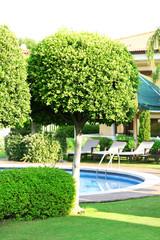 Beautiful tree in hotel poolside