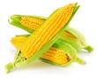 canvas print picture - corn