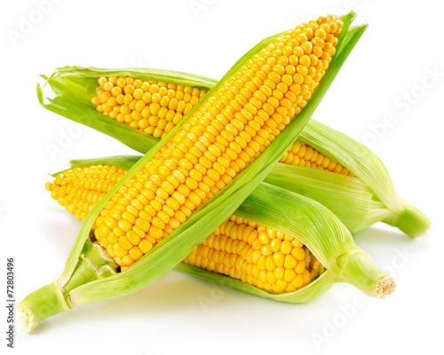 canvas print picture corn