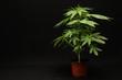Leinwanddruck Bild - Marijuana