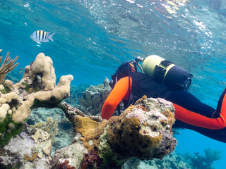 scubadiver undersea