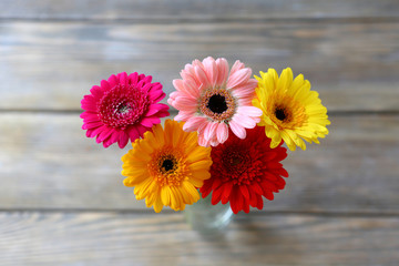 fresh multicolored gerbera