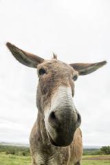 single donkey
