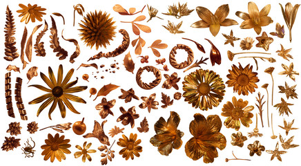 Real Gilded Flower Parts