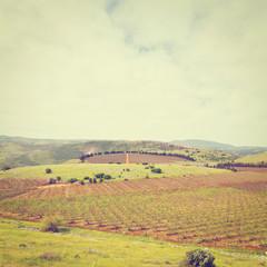 Field in Galilee