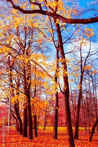 Leinwanddruck Bild Trees of Yellow Woods Landscape