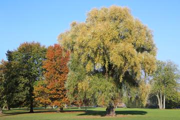 Weide im Alsterpark