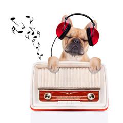 dog   relax music