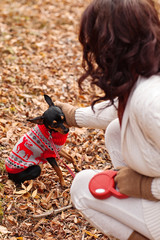 Young woman walking with her miniature pincher puppy