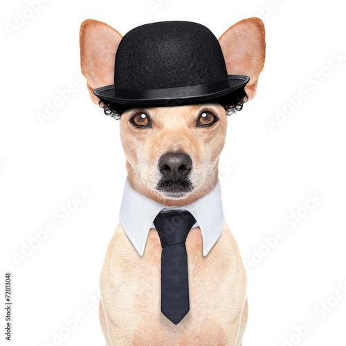 Poster funny retro dog
