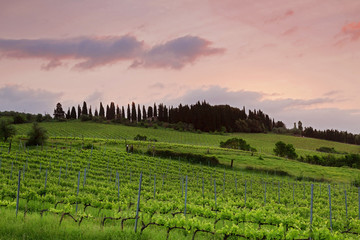 The vineyards of Tuscany at sunset
