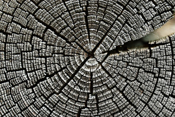 old wood texture background circle