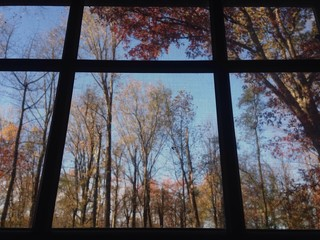 window view in the fall
