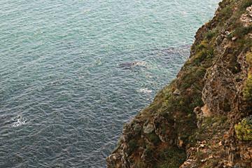rocks sea shore
