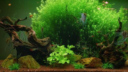 Home Aquarium algae and fishes