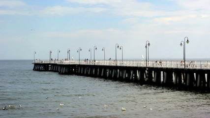seagulls in the sea on the background of the pier